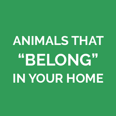 Animals That Belong in Your Home