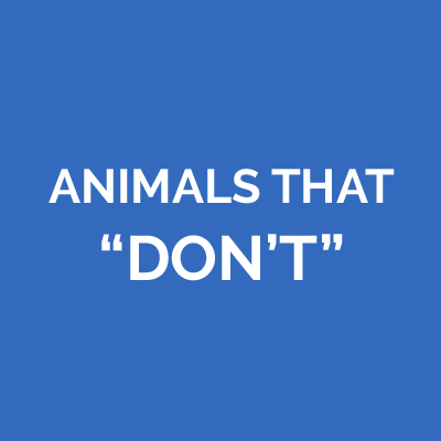 Animals That Don't Belong